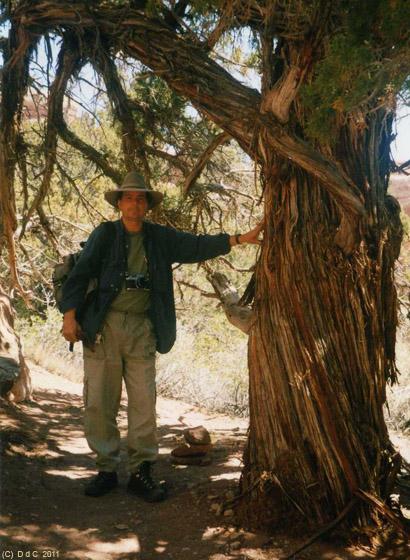 Silversand in Canyonlands, Needles, 4x4 backcountry: Horseshoe Canyon