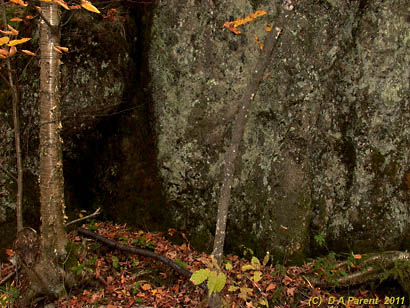 Fall yellow birch and igneus rock, Orford Park, Quebec
